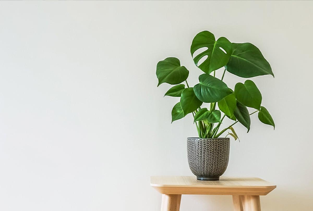 Pflanze vor Wand